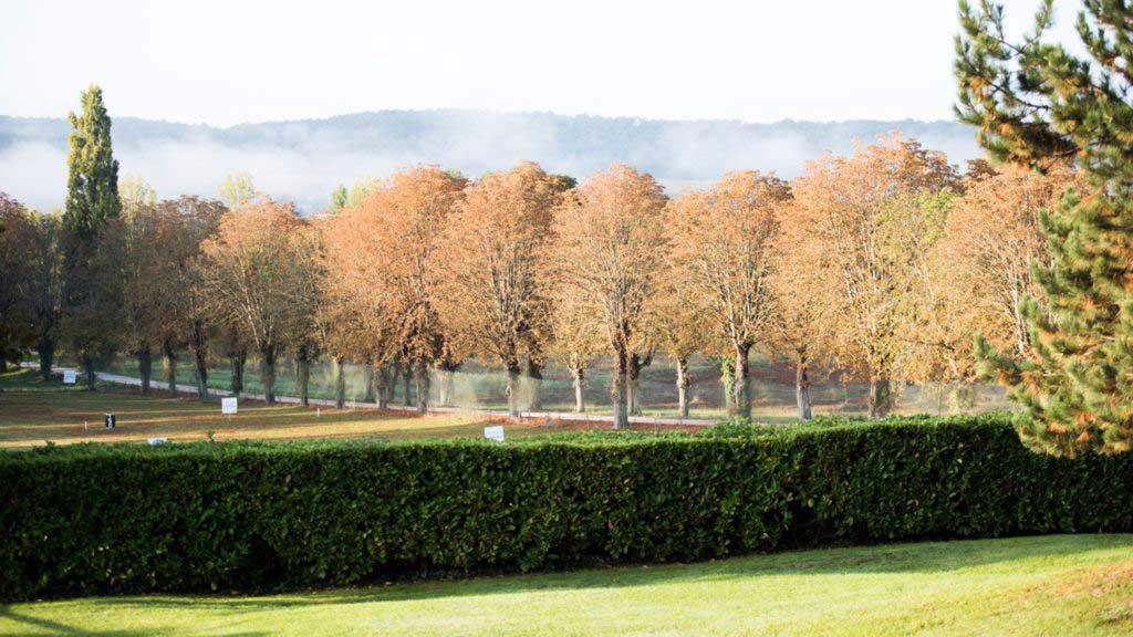 Lane to chateau