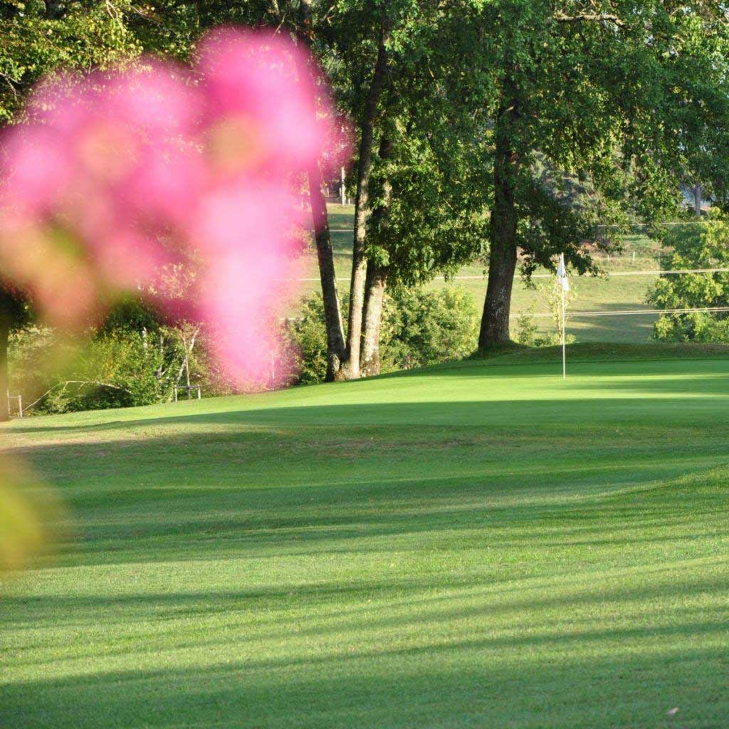 Golf-course-flower